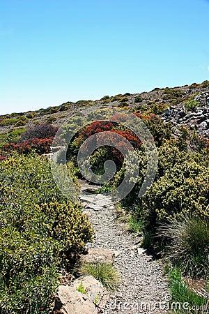 Path through vegetation