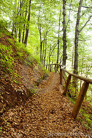 Free Path Wood Royalty Free Stock Images - 11969809
