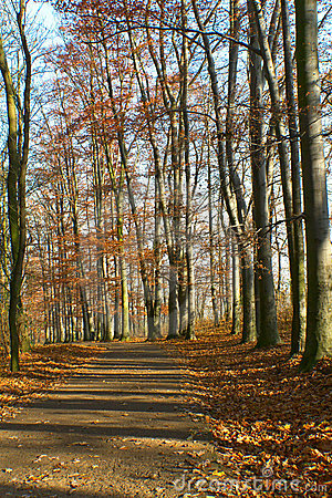 Path in the woods in autumn