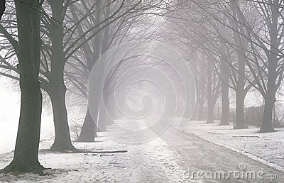 Pathway in the fog