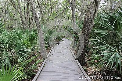 Pathway through jungle