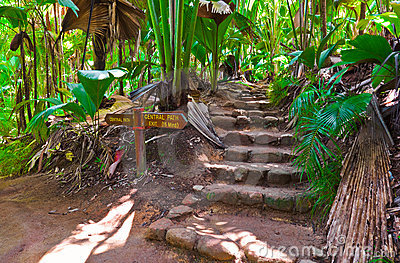 Pathway in jungle, Vallee de Mai, Seychelles