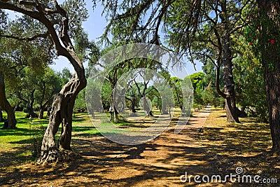 Pathway in park at Croatia
