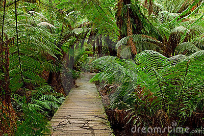 Pathway in rain forest