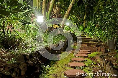 Pathway Stones in a Night Garden