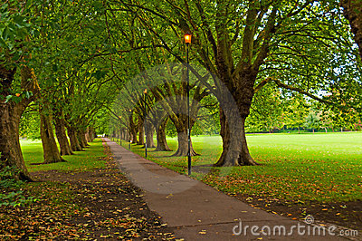 Pathway through trees in park