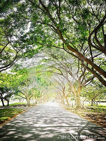 Free Pathway Under Trees Royalty Free Stock Photos - 103913658