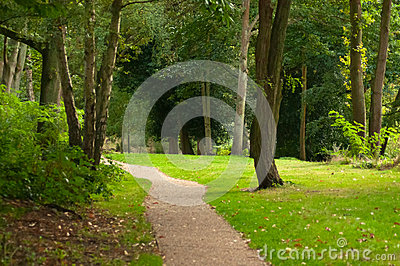 Pathway in woodland