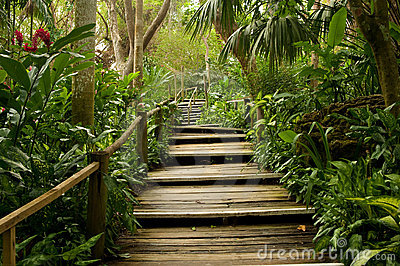 Pathways in the jungle