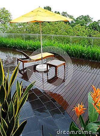 Patio garden after rain