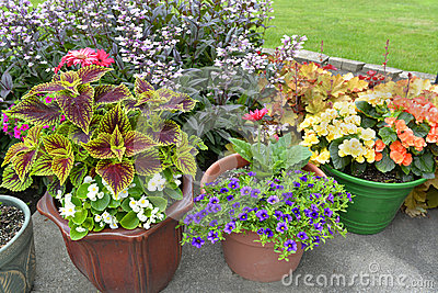 Different sizes and shapes of pots with colorful plants in full bloom. - Patio Of Potted Plants. Stock Photo - Image: 55385725