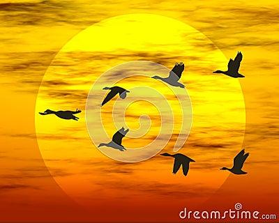 Patos do vôo
