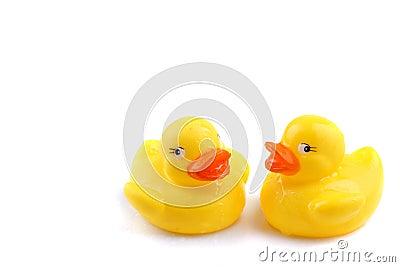 Patos molhados