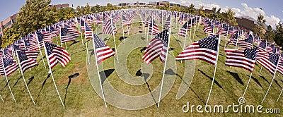 Patriotic Flag Display