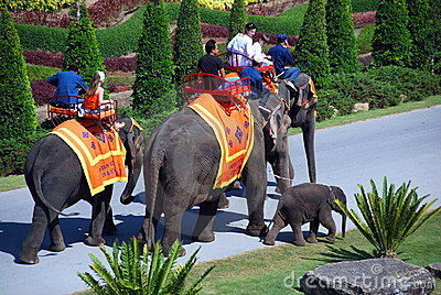 Pattaya, Thailand: Nong Nooch Elephant Rides Editorial Photo