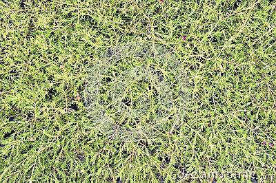 Pattern flower grass