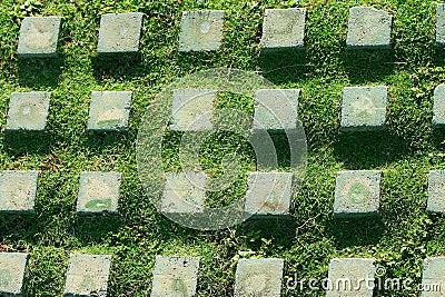 Pattern stone and grass