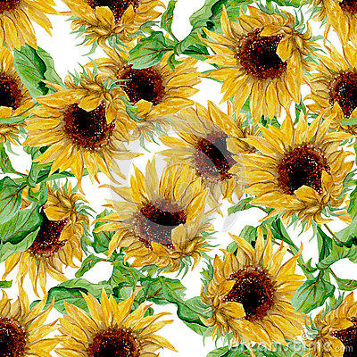 Free Pattern With Yellow Sunflowers Painted In Watercolor On A White Background Royalty Free Stock Image - 60056326