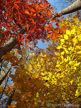 Free Patuxent River Park Foliage Royalty Free Stock Photography - 3688587