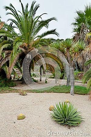paumes au jardin de cactus de montjuic barcelone