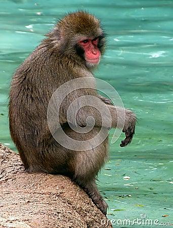 Pausa della scimmia