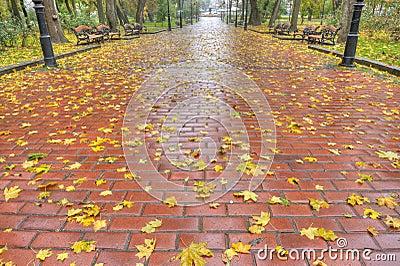 Paved sidewalk with autumn foliage