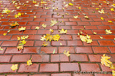 Paved sidewalk with autumn foliage