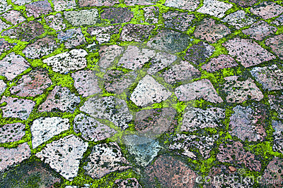 Paving with moss