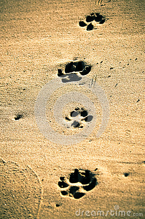 Free Paw Prints At Beach. Stock Photography - 46086632