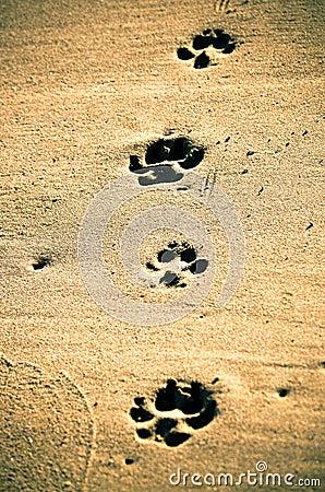 Paw prints at beach.