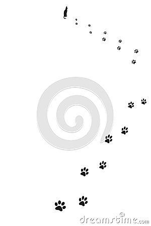 Paw prints of cat