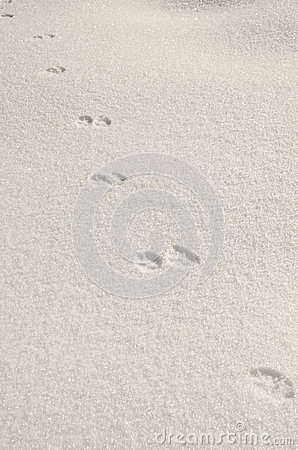 Paw on snow