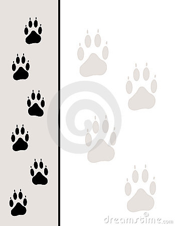 Paw Tracks Background