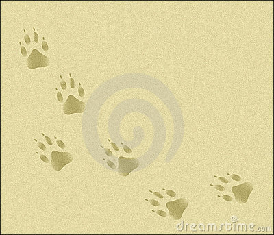 Paw Tracks in Sand