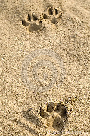 Free Pawprints In Sand Royalty Free Stock Photo - 1498045