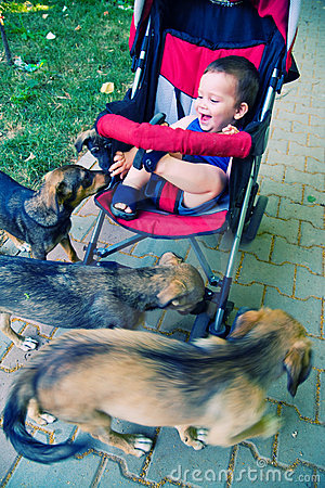 Payful dogs and child