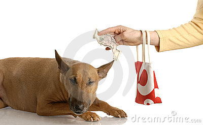 Paying for expensive dog