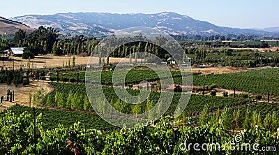 Pays de vin de la Californie
