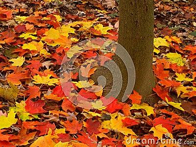 Paysage d automne en Illinois