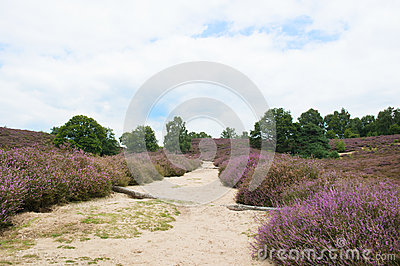 Paysage de Heather