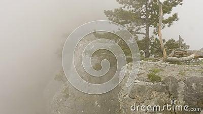 Paysage de nature avec l'arbre conifére vert isolé sur le bord de la falaise en brouillard banque de vidéos
