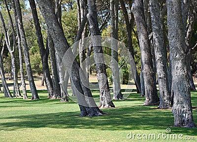 Paysage de tronc d 39 arbre manning park australie occidentale photo stock image 61737638 - Achat tronc arbre decoratif ...