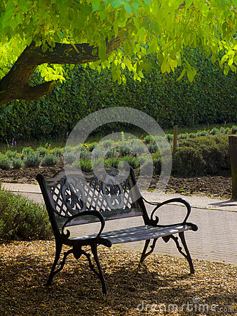 Peaceful bench in garden