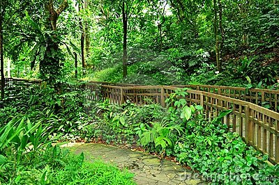 Peaceful garden with forested background