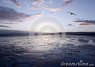 Peaceful Glide