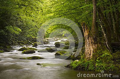 Peaceful Great Smoky Mountains National Park