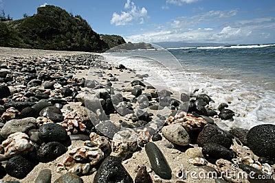 Peaceful Hawaiian beach