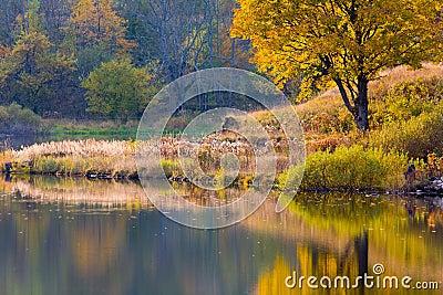 Peaceful lake coastline in Autumn