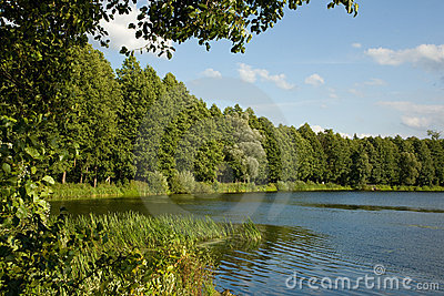 Peaceful lake inside forest