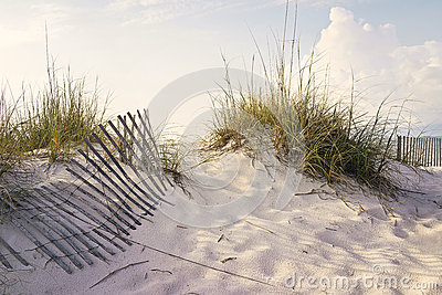 Peaceful Morning in the Beach Sand Dunes